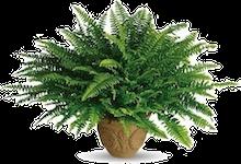 plants that remove toxins