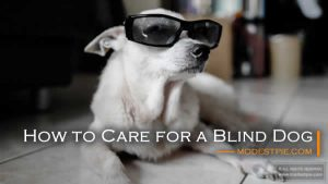 care for a blind dog