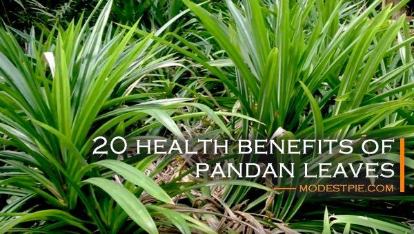 health benefits of pandan leaves