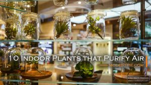 plants that purify air