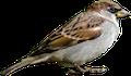 deter birds
