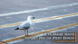 get rid of pest birds