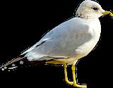 deter pest birds