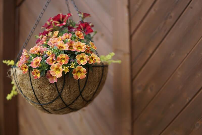 natural flower pot